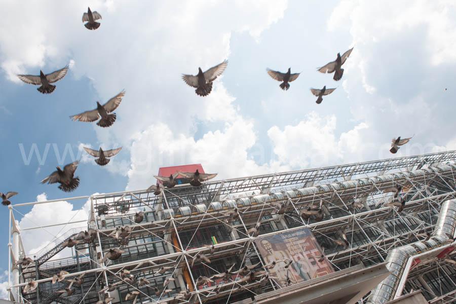 france, région ile de france, paris 4e arrondissement, beaubourg, centre pompidou, piazza, place, touristes, pigeons,