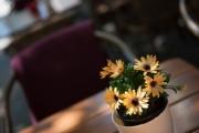 allemagne (germany), berlin, friedrichshain, immauble, ancien berlin est, pot de fleur sur table de restaurant, terrasse,