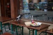 allemagne, germany, berlin, scheunenviertel, quartier des granges, restaurant, cafe, terrasse